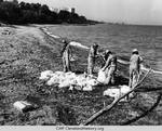 Oil Clean Up At Wildwood Park Beach by Herman Seid