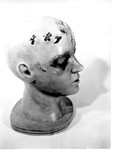 Other Evidence 02. Model of Marilyn's Head, Right Side by Cleveland / Bay Village Police Department