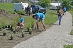 Hillside Community Park, Re-imagining Cleveland 3, Planting