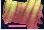 Photo 14: Stained T-Shirt