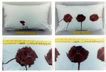 Test pillows: other photos from Wentzel's experiments