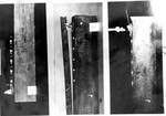 Kirk Photo 44: Teeth Attatched to Display Board by Paul Leeland Kirk
