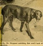 54/07/13 If Sheppards' Dog Could Talk Bay Mystery Might Be Solved