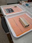 Rolled photographs to be relaxed in humidification trays by Marsha Miles