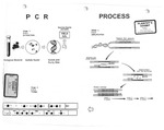 Plaintiff's Exhibit 0331: DNA PCR process and typing strips as demonstrative aid